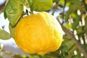 Juice your lemons